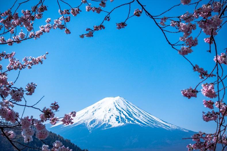 快晴の青空に富士山と桜