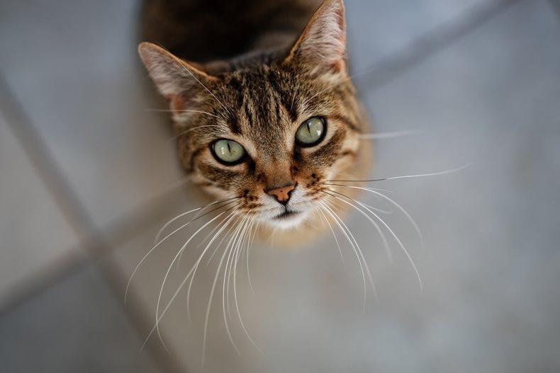 こちらを見上げる茶トラの猫